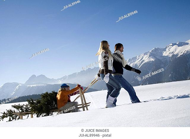 Parents pulling children and pine tree on sled, Luesener Alm, Dolomite Alps, South Tyrol, Italy