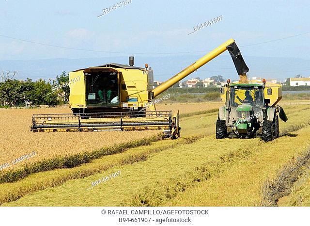 Cosecha de arroz. Delta del Ebro. Baix Ebre. Tarragona. Catalunya