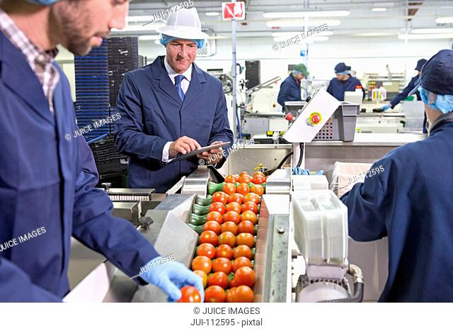 Quality control workers inspecting ripe red tomatoes on production line in food processing plant
