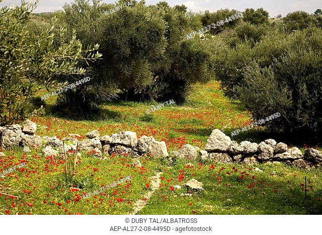 Photograph of olive trees in the Terebinth valley