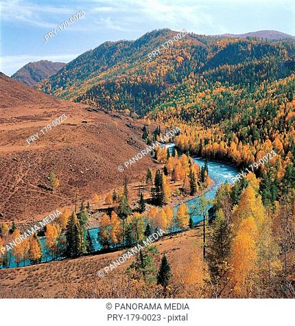 Overlook of trees and river, Kanas Lake, Sinkiang