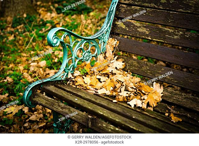 The end of the summer comes to a bench in a garden in southern England, and fallen oak leaves herald the colder weather