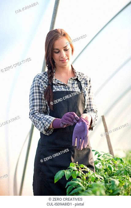 Young woman putting on gardening gloves