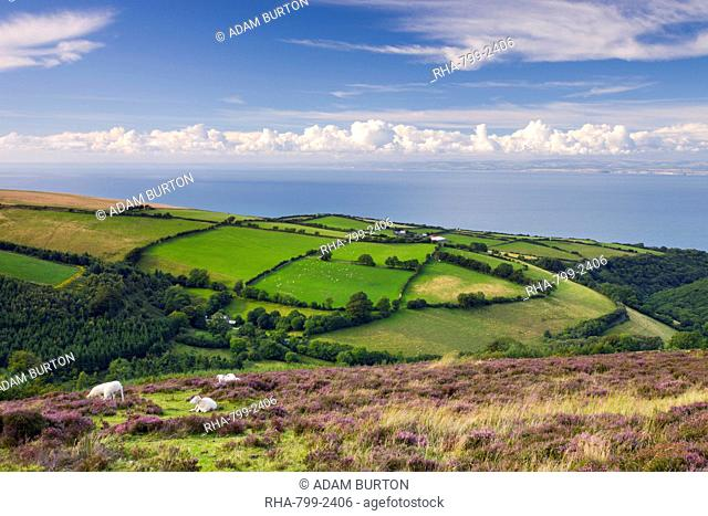 Exmoor countryside and coast in summertime, Exmoor National Park, Somerset, England, United Kingdom, Europe