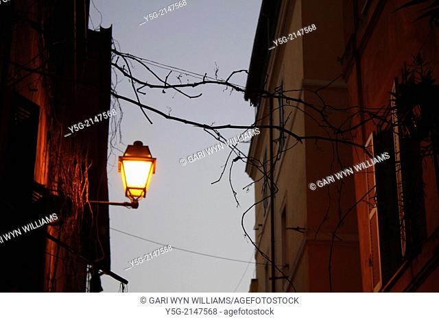 Street lamp with hanging branches in the trastevere district of rome italy