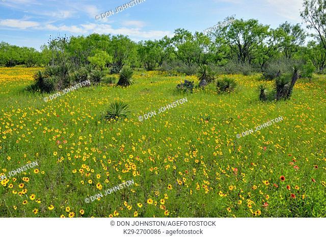 Spring wildflowers, Llano County, Texas, USA