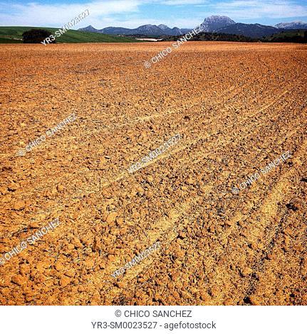Desertified and deforested land used by industrial monoculture in Prado del Rey, Sierra de Cadiz, Andalusia, Spain