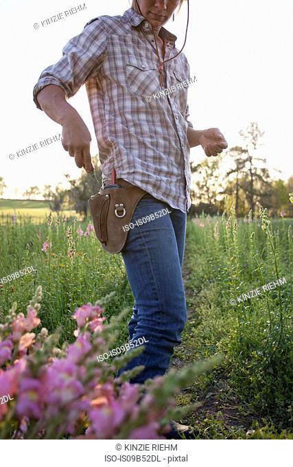 Woman removing scissors from tool belt in snapdragon (antirrhinum) flower farm field