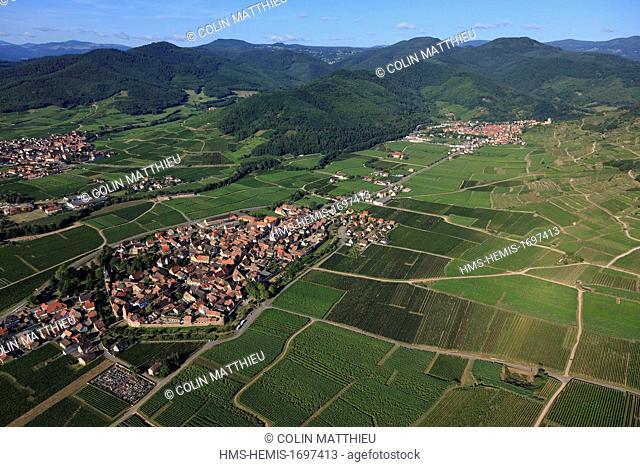 France, Haut Rhin, Alsace wine road, Kientzheim, fortified village, vineyards (aerial view)