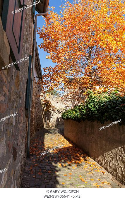 Germany, Rhineland-Palatinate, Freinsheim, city wall and empty way in autumn