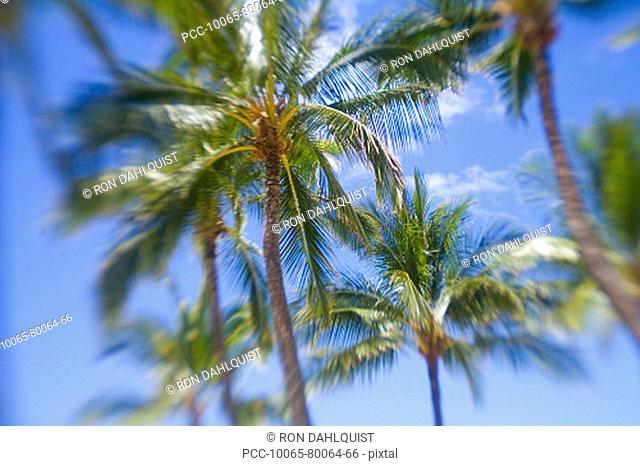 Hawaii, Palm trees with blur around edges