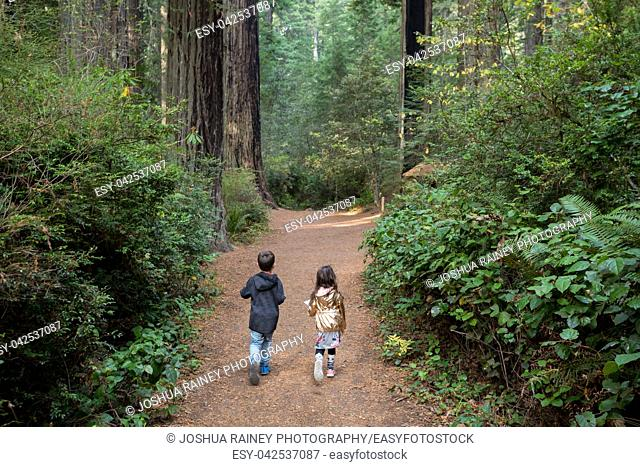 Brother and sister hike along a worn trail along the Lady Bird Johnson Grove Trail in the California Redwoods National Park in coastal Northwest California