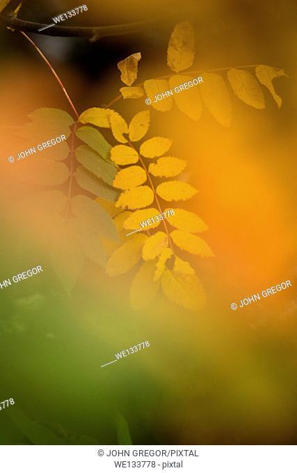 Fall Color, Lake Superior Provincial Park, Ontario, Canada