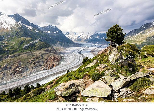 View on the Aletsch glacier and Wannenhorn (3906m), region Aletsch glacier, UNESCO World Heritage - natural site, Aletsch arena, canton Valais, the Rhone Valley