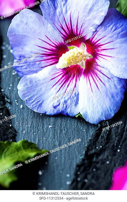 Candied Hibiscus Flowers Stock Photos And Images Age Fotostock