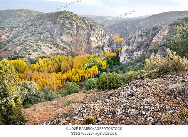 Autumn in the canyon of Rio Dulce. Aragosa. Guadalajara. Castilla la Mancha. Spain. Europe