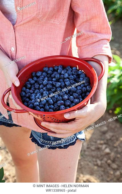 A girl in a pink shirt holding a large bowl of harvested blueberry fruits