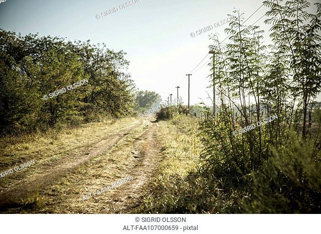 Power lines along dirt road