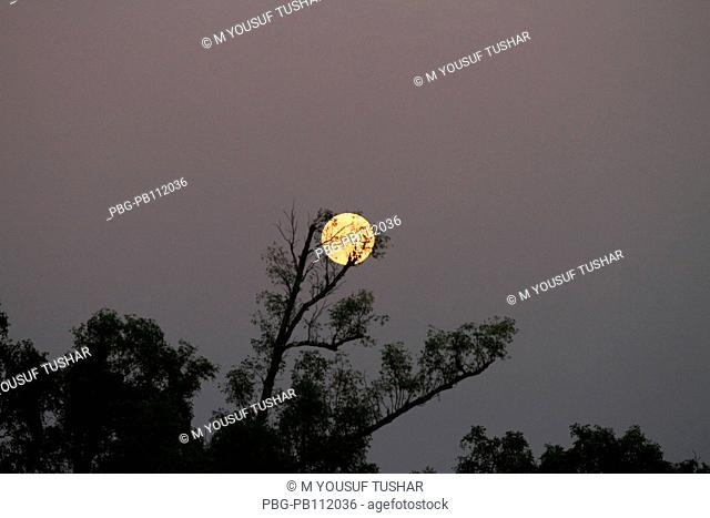 The moon picture taken from sundarban The Sundarbans, a UNESCO World Heritage Site and a wildlife sanctuary The largest littoral mangrove forest in the world