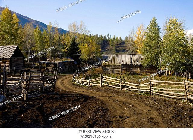 Altay Xinjiang,White Haba