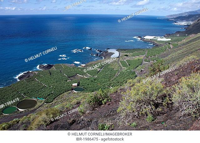 Banana plantations on the South coast near Fuencaliente, Los Canarios, La Palma, Spain, Canary Islands, Europe, Atlantic Ocean