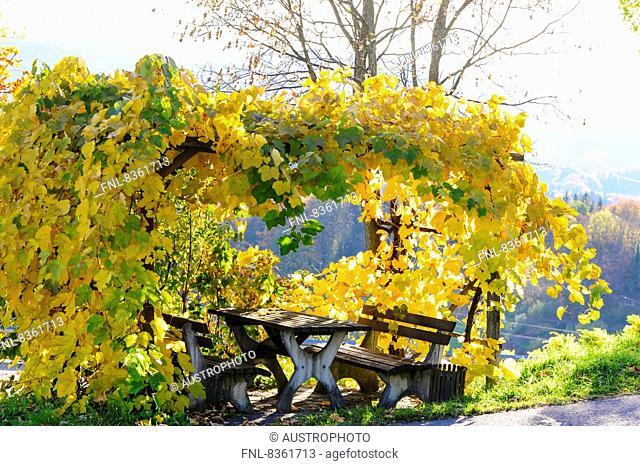 Southern Styrian wine route in autumn, Glanz an der Weinstrasse, Austria