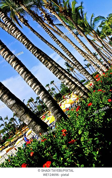 A view of the palm trees in the park in Gran Canaries, Spain