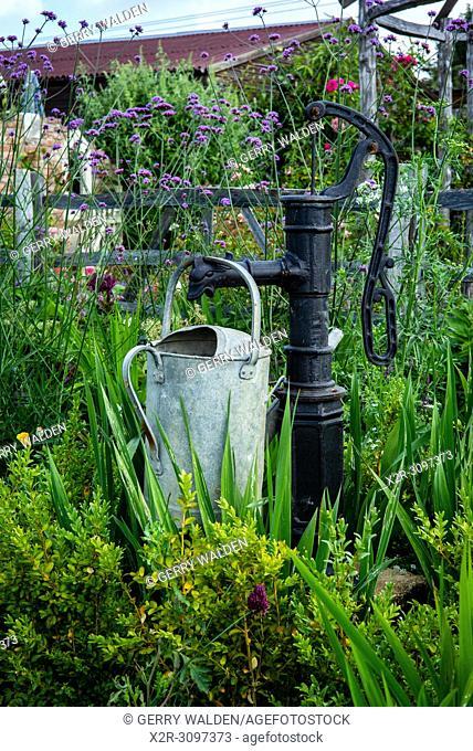 (New Forest Lavender Gardens, Wiltshire, England)