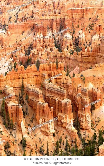 Hoodoos, Sunset Point, Bryce Amphitheater, Bryce Canyon National Park, Utah, USA. Hoodoos are tall skinny spires of rock that protrude from the bottom of arid...