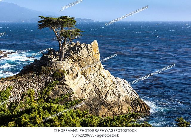 Lone Cypress Tree on 17 Mile Drive, California, USA
