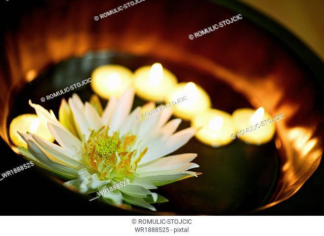 Lotus blossom and candlelight, Adriatic Sea, Croatia, Europe