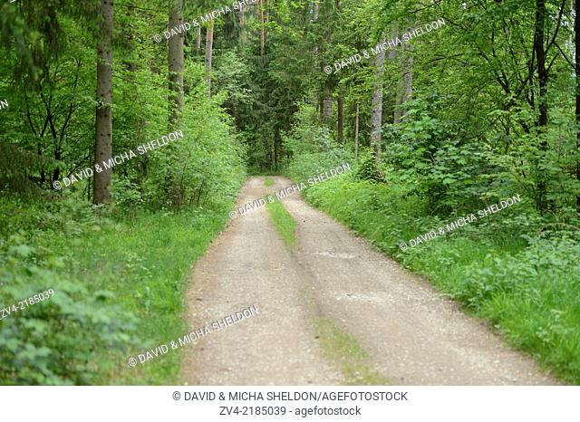 Landscape of a trail going through the forest in spring, Upper Palatinate