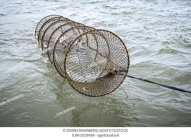Waterman pulling in a baited catfish trap on the Potomac River near Fort Washington, Maryland, USA