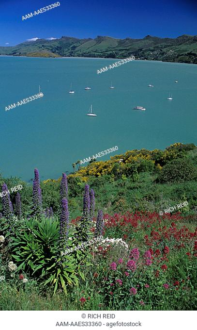 Wildflowers and Boats in Cass Bay, Lyttleton Harbor, New Zealand