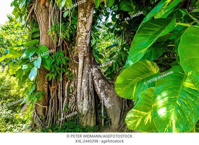 Tropischer Regenwald, Pao de Acucar, Zuckerhut, Sugarloaf, Rio de Janiero, Brasilien