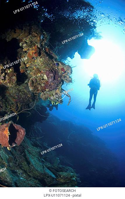 Scuba Diver over coral and sponge reef, Maria La Gorda, Caribbean