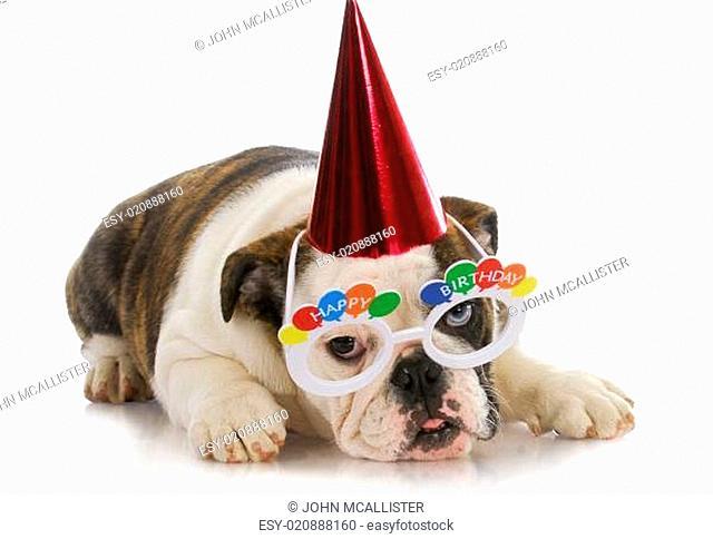birthday puppy