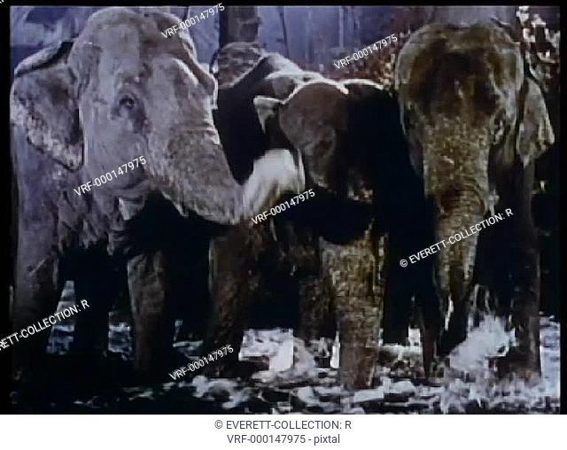 Three elephants wading in water