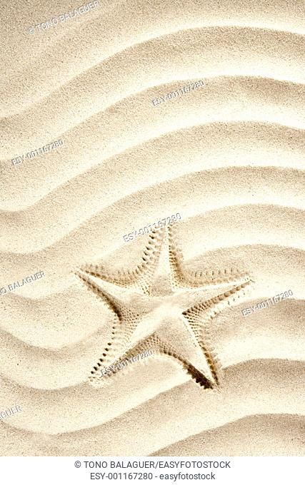 beach starfish printed over white caribbean sand such a summer vacation symbol