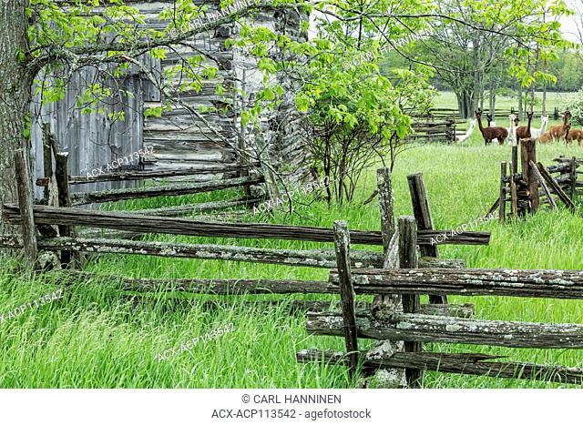 Old log barn, split-rail cedar fence, Kagawong, Manitoulin Island, Ontario, Canada