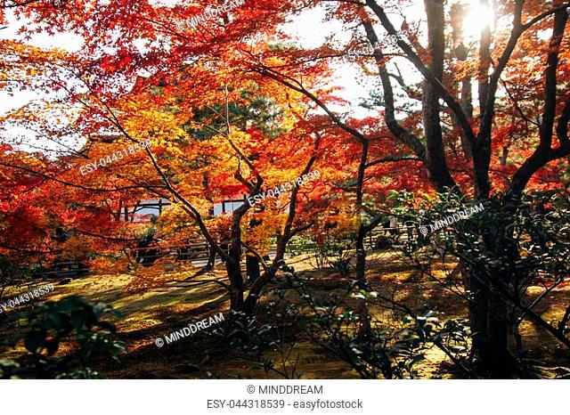"""Kinkaku-ji Temple with Red leaf in Autumn season. Buddhist temple in Kyoto, Japan. For other topics translated as """"""""Temple of the Golden Pavilion"""""""" or """"""""Golden..."""