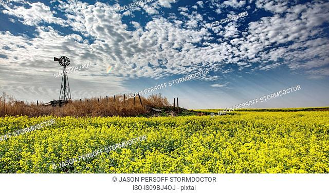 Altocumulus and crepuscular rays over rapeseed field forecasting storm, Hooker, Oklahoma, US