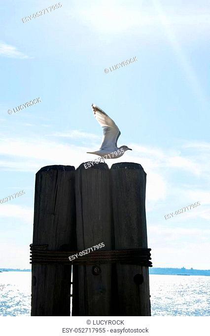 A seagull flying off a wooden pillar near the ocean in the sun