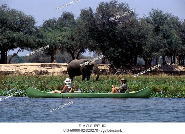 CANOEING the mighty ZAMBEZI provides many close encounters with ELEPHANTS - ZIMBABWE