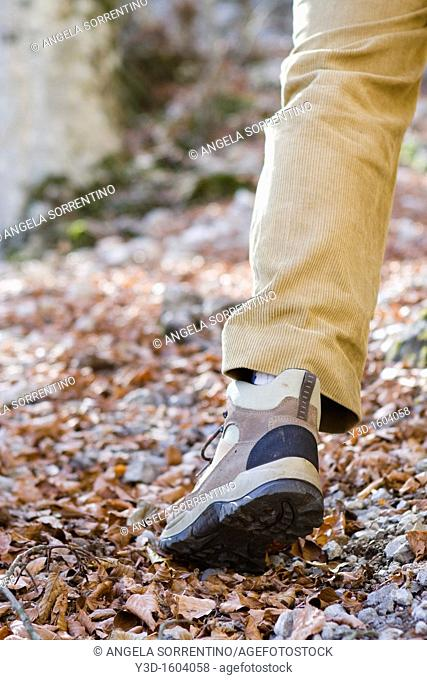 Person walking in beech forest focoused on hiking boot