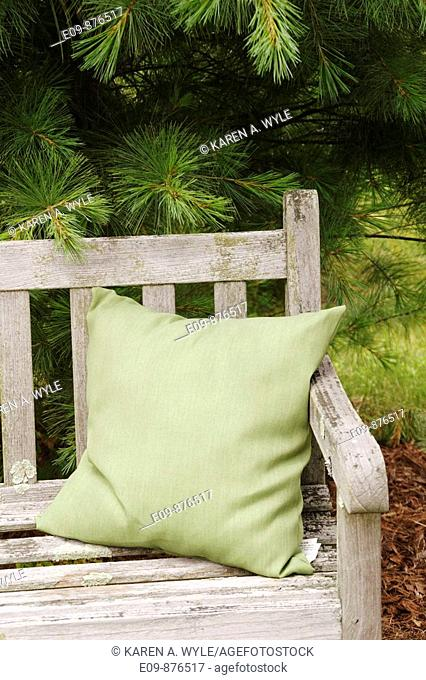 wooden bench with green cushion at one end, under fir tree, Bloomington, IN