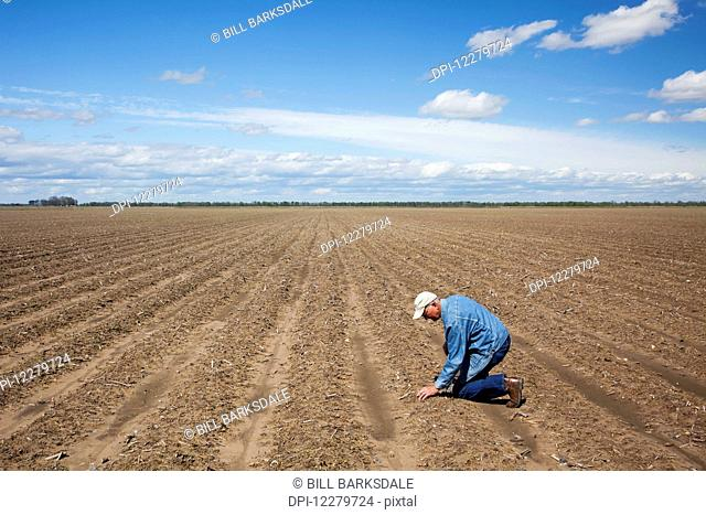 Crop consultant examines bedded land; England, Arkansas, United States of America