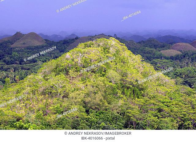 Chocolate Hills in Carmen, Bohol Island, Southeast Asia, Philippines