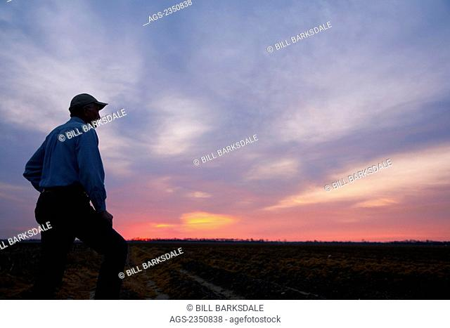 Agriculture - A farmer (grower) looks out across his field at sunrise / Eastern Arkansas, USA