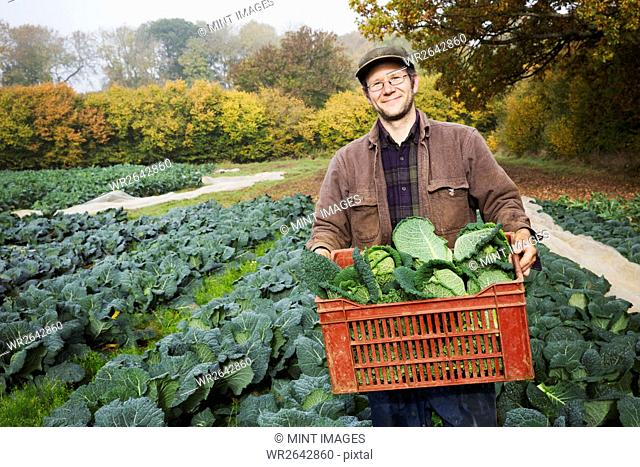 A man carrying a crate of fresh picked vegetables in a field